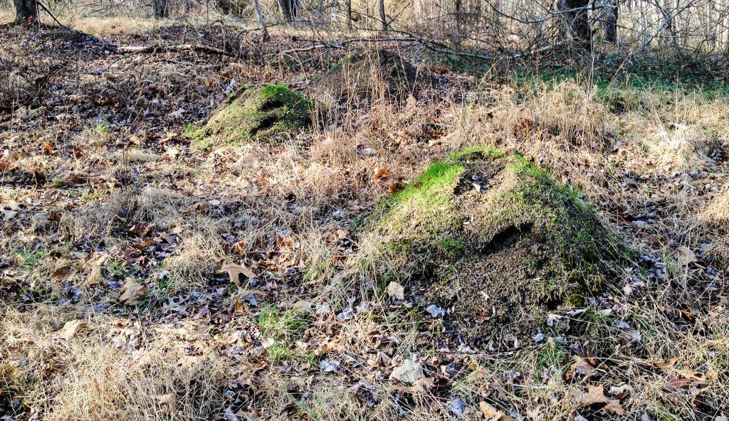 Mound Builder Trail, Little Bennett Regional Park